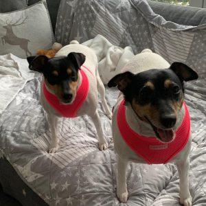 Nachrichten von Mia und Molly