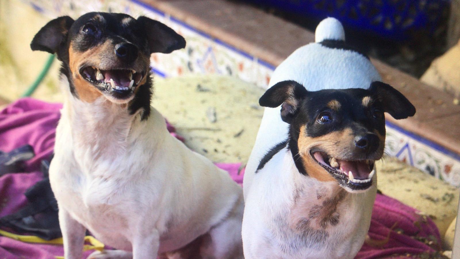 Molly und Mia