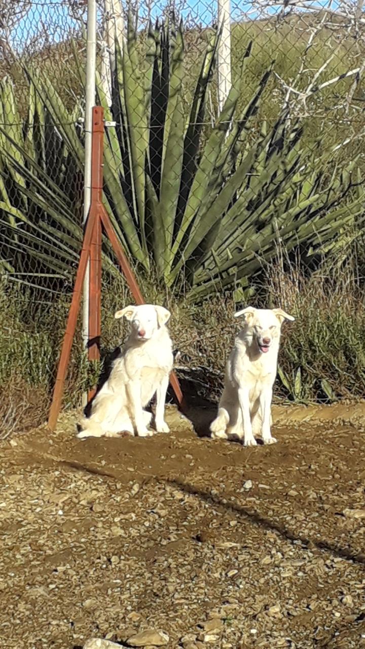 Sami und Killo